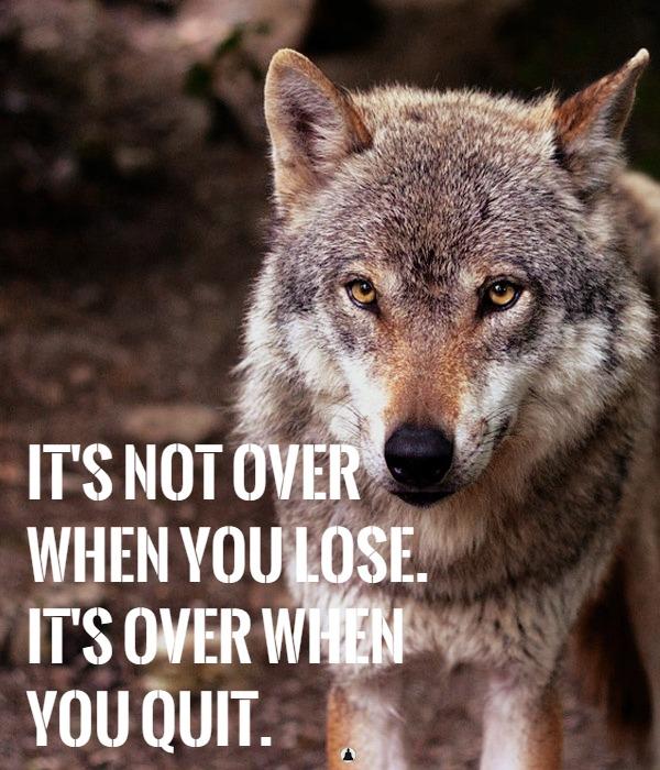 wolf characteristics personality