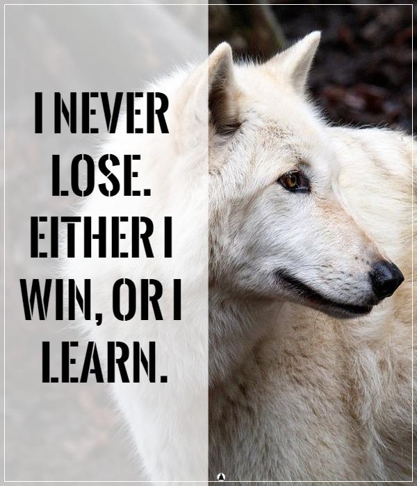 wolf traits personality