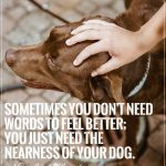 9-signs-of-dog-love