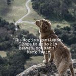 Dog is a gentleman