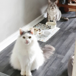 Cat With Rare Condition best friends