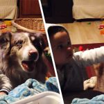 a dog says mama