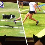 dog watches itself