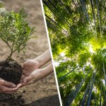 planting a trillion trees could save the planet