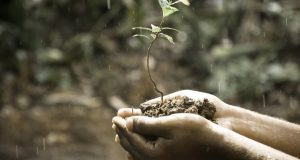 plant more trees save earth