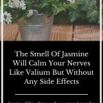 Smell-Jasmine-relax