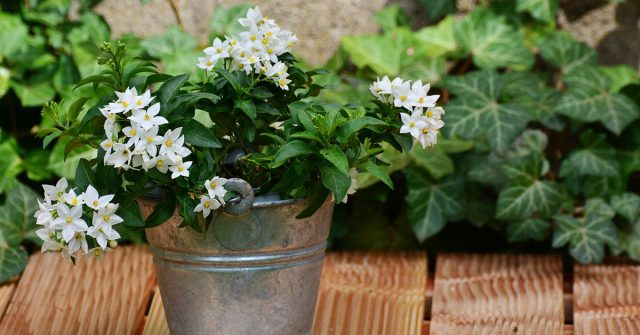 The Smell Of Jasmine Calming The Nerves