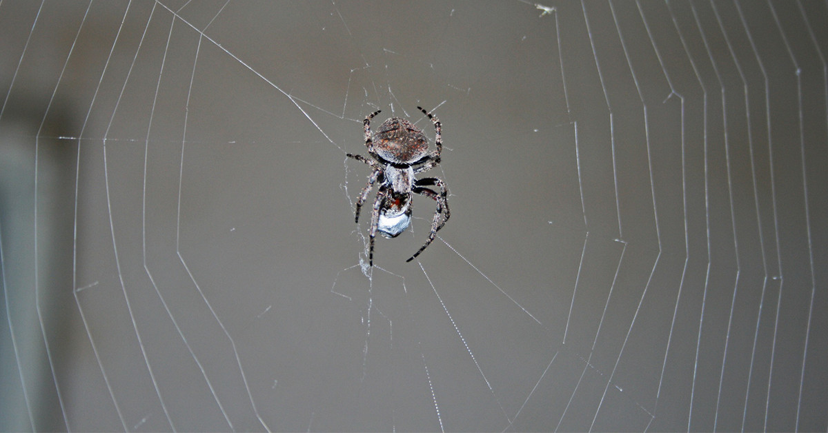 Here's Why You Shouldn't Kill Spiders In Your Home
