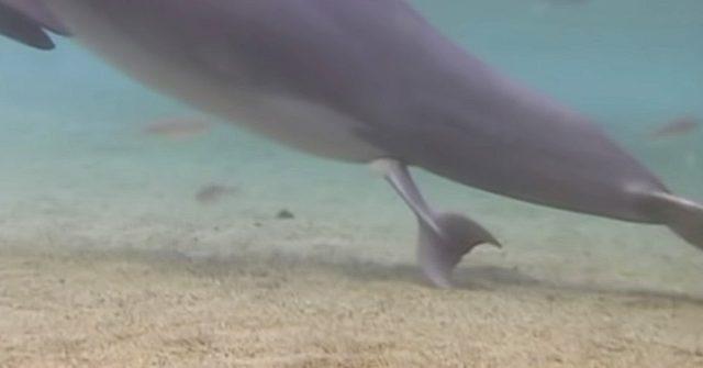 dolphin birth hawaii