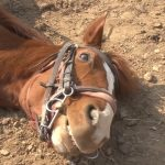 horse smiling