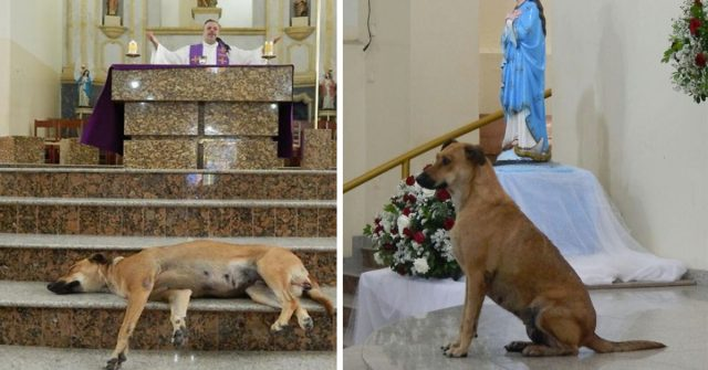 stray dog priest