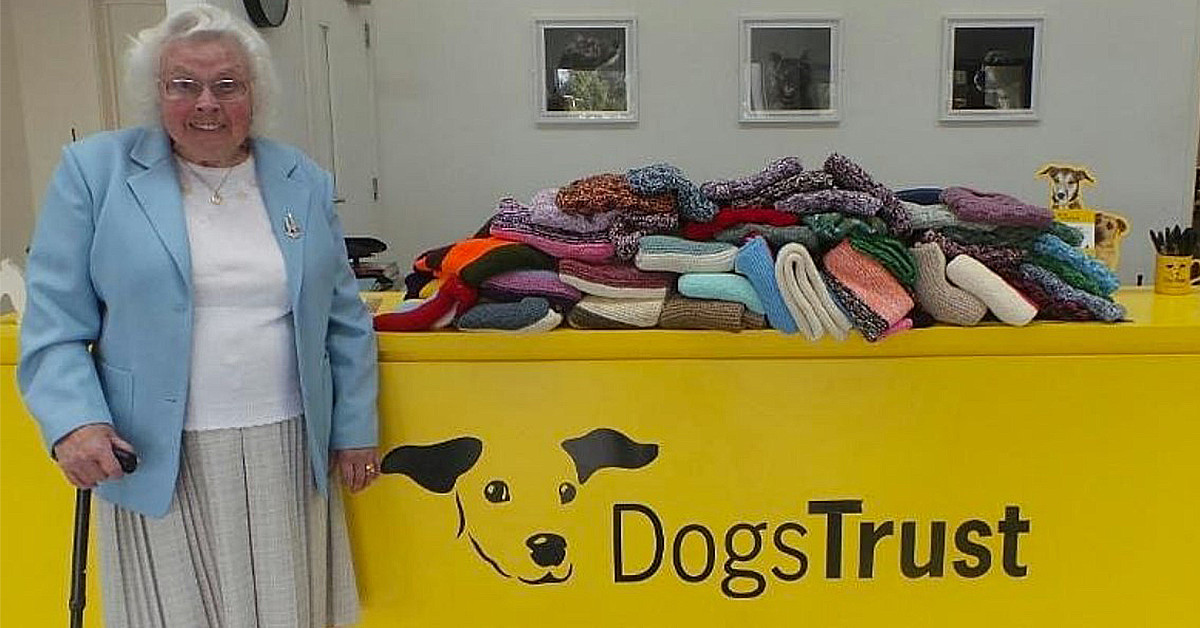 89-Year Old Woman Knitted Over 400 Cozy Blankets For Shelter Puppies