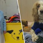 woman knitted blankets for dogs