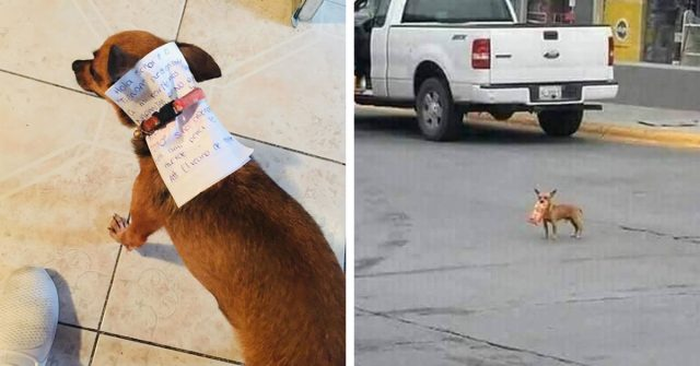 a guys sends his dog to get cheetos