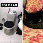 Black Cats Are Not Only Exceptional, They Are Cute As A Button Too