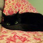 blackcats13