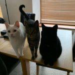 blackcats15