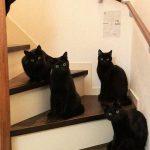 blackcats18