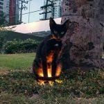 blackcats19