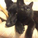 blackcats20