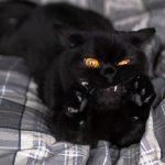 blackcats24