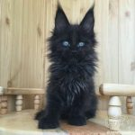 blackcats25