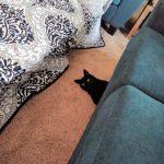 blackcats33