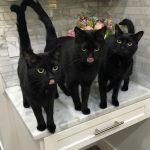 blackcats36