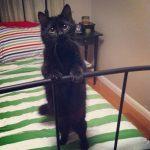 blackcats39