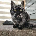 blackcats8