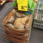 cats asleep11
