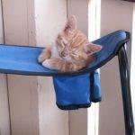 cats asleep12
