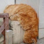 cats asleep13