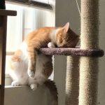 cats asleep21