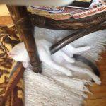 cats asleep22