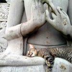 cats asleep24