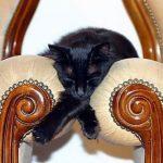 cats asleep32