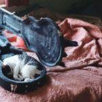 cats asleep34