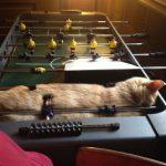 cats asleep38