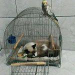 cats asleep4