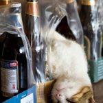 cats asleep5
