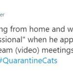 cats quarantine 1