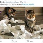 cats quarantine 12