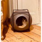 cats quarantine 18