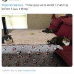 cats quarantine 20
