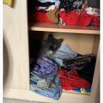 cats quarantine 23