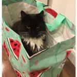 cats quarantine 25