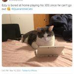 cats quarantine 29