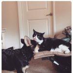 cats quarantine 3