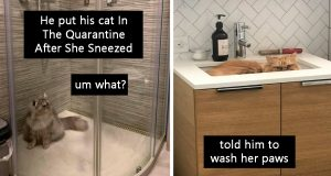 The Best Photos Of Quarantined Cats Stuck At Home With Their Owners